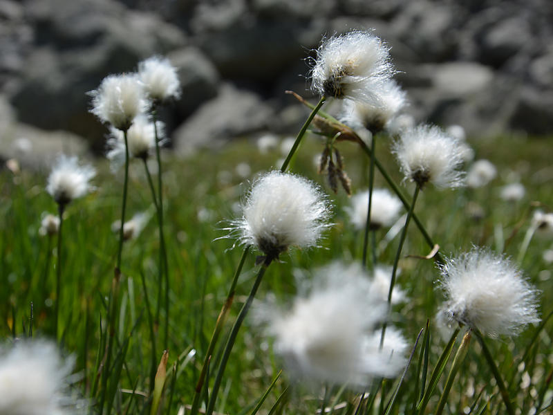 Flora, Fauna & Engadiner Lebensart: Wanderungen im Nationalpark